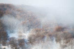 boschi nebbia e neve